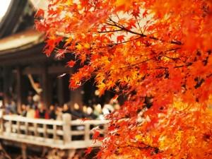 圧倒的人気の絶景、1位は京都府「東福寺」!紅葉シーズンに行きたい寺院ランキング